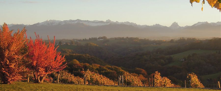 View-of-snow-capped-mountains-autumn-leaves