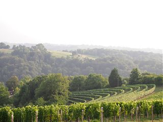 vineyards at close range