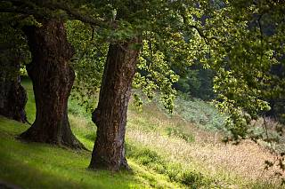 Trees and meadow