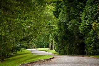 L'Allée de Clos Mirabel avec des arbres de chaque coté