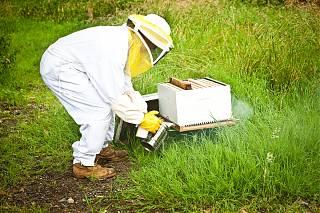 Homme avec ses abeilles
